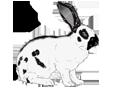 Coniglio ##STADE## - vestito 1340000002