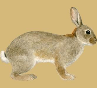 Accogli un animale della fattoria di specie coniglio
